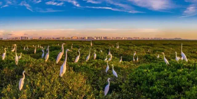 上榜2020中国候鸟式养老冬季栖息地,北海旅居新趋势