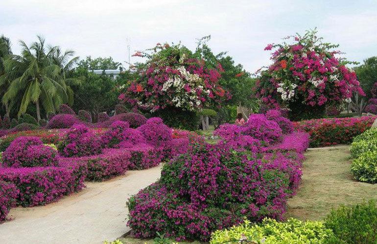 中海神州半岛 热带植物园