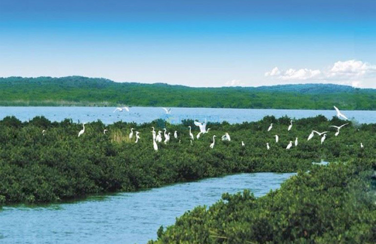 富力红树湾 周边配套:红树林湿地公园