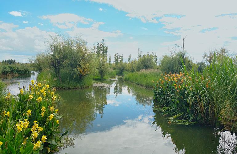 蓝光花田国际 周边湿地实景图