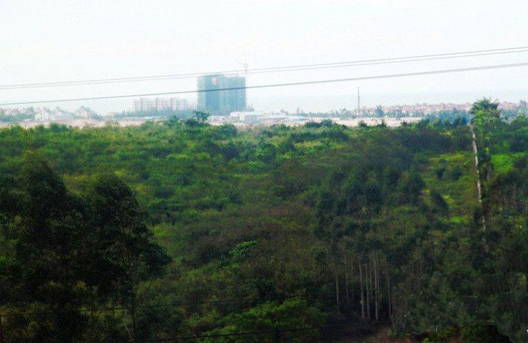 东汇森语林 风景