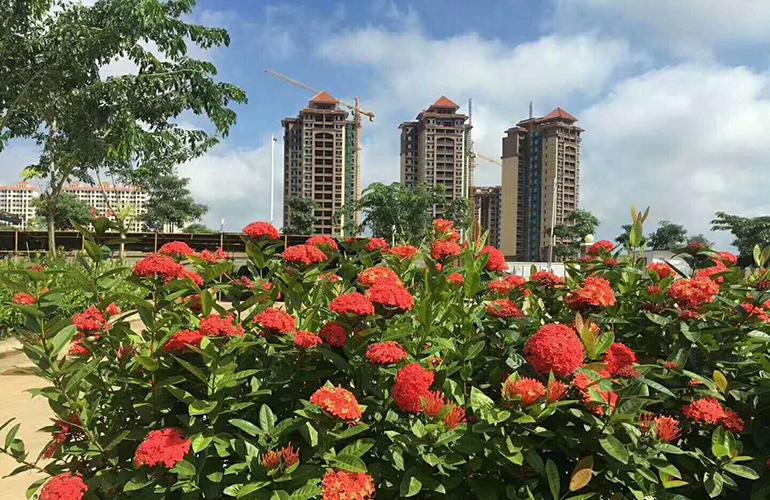 毗海瀾灣 實景圖