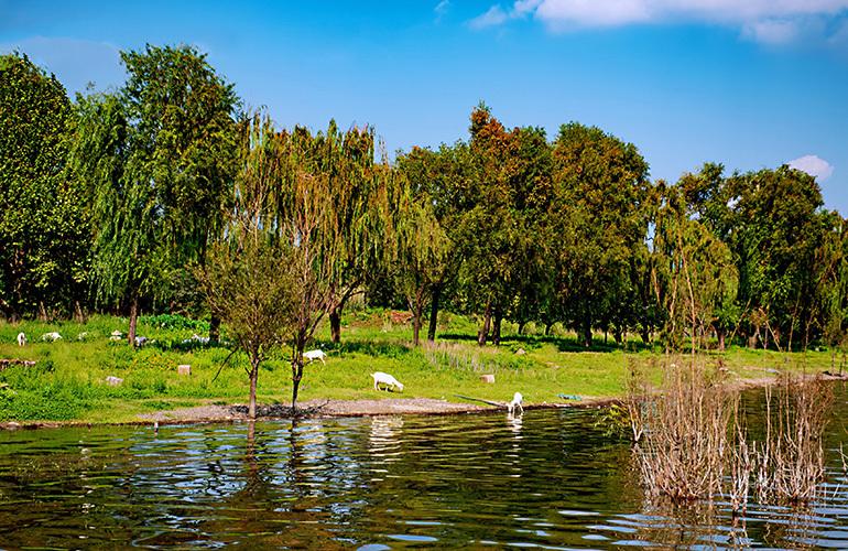 昆明富力湾 岸边湿地