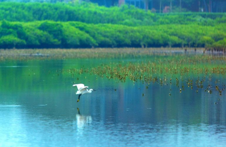 富力红树湾 红树林公园