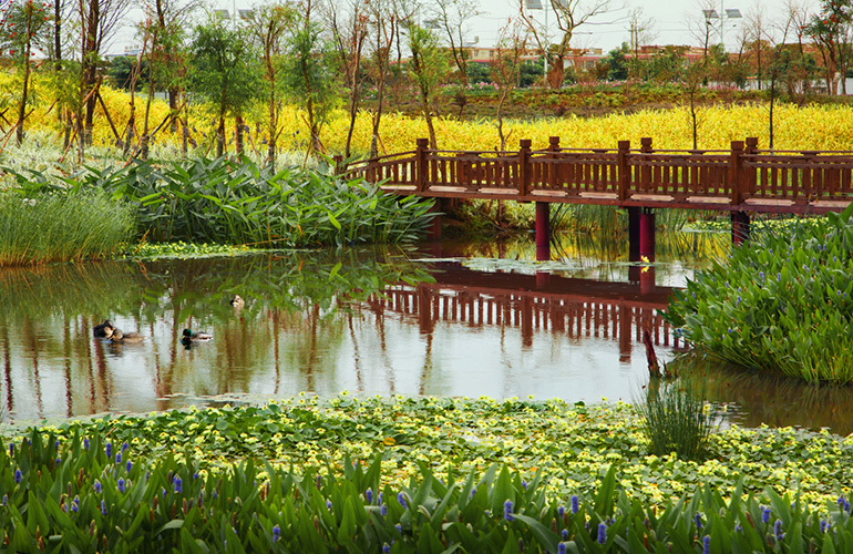 俊发生态半岛 湿地公园