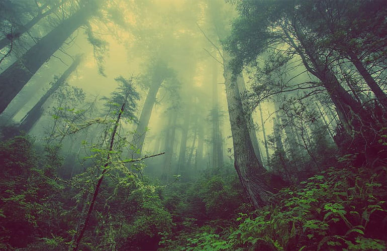 龙栖湾温泉1号 尖峰岭森林公园