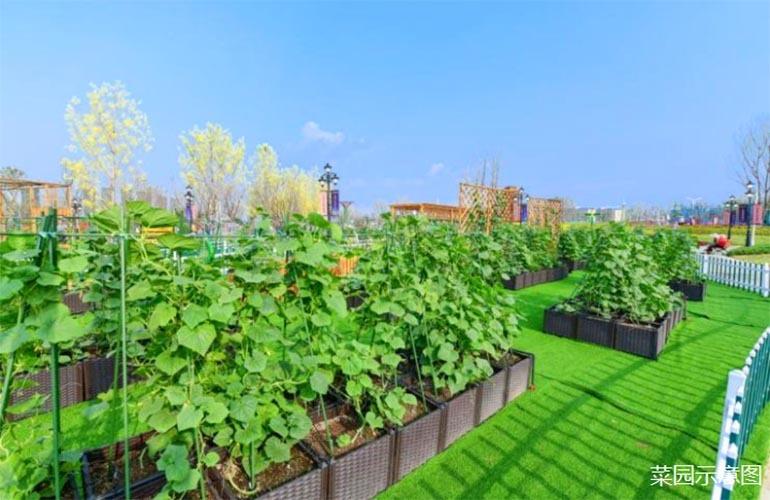 椰林小筑菜园示意图