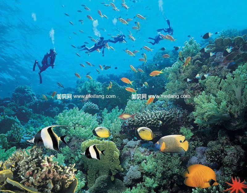 龙憩园中园 周边配套:潜水项目