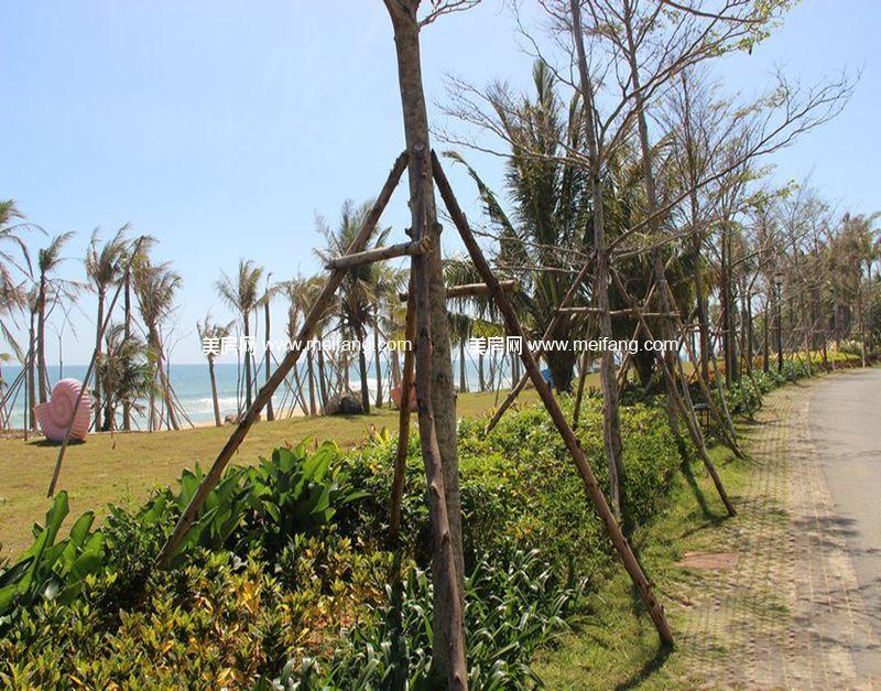 小区内绿化实景图