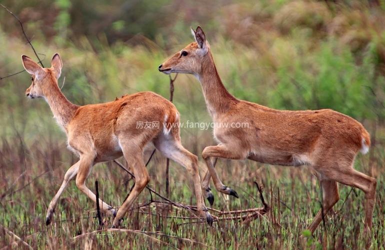 鹭湖国际养生度假区 邦溪坡鹿自然保护区