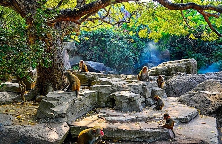 合景汀澜海岸 猴岛