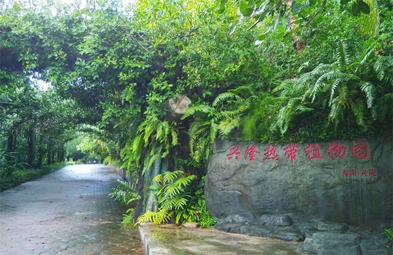 宝安兴隆椰林湾 兴隆热带植物园