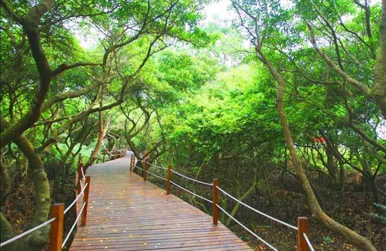 金尊文府海景 红树林